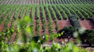 Bodegas Habla Vines