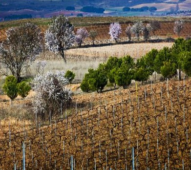 Our Wineries Spaniche Wines